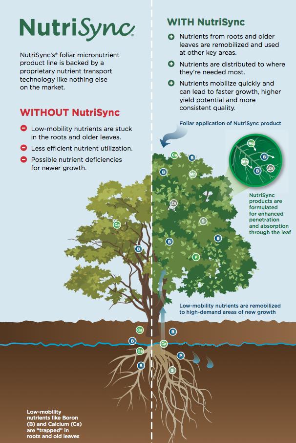 NutriSync example on trees