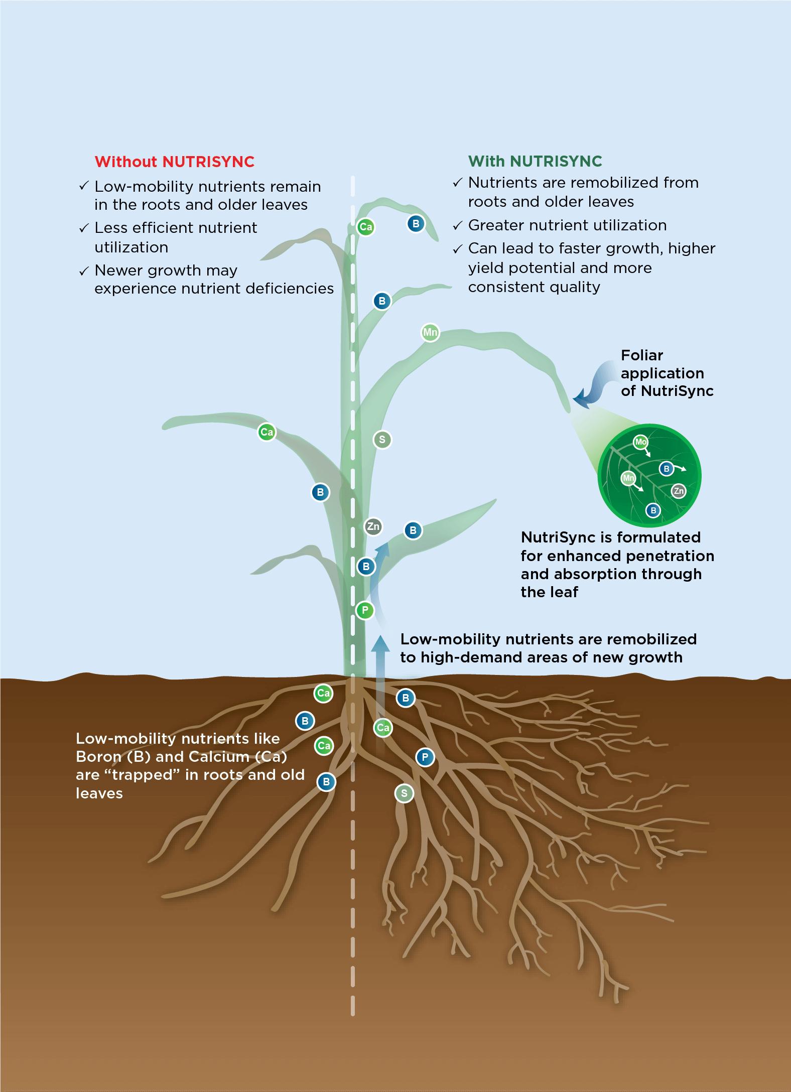 NutriSync example on corn